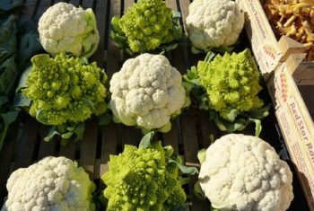 Incroyables légumes crucifères - Biblio