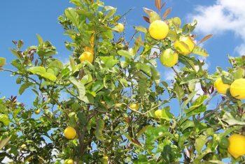 Fruits et légumes contre dépression - Biblio