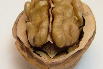 Maladie d'Alzheimer, déclin cognitif, aliments et hygiène de vie- Biblio