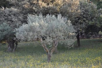 Régime méditerranéen : des bénéfices spectaculaires sur le cœur