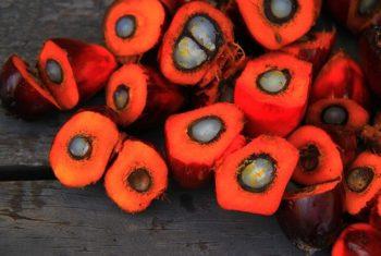 Graisses saturées : huiles de palme et de coco - Biblio