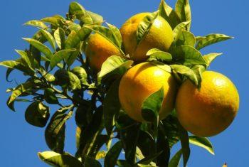 Fruits et légumes contre cancer du col de l'utérus - Biblio