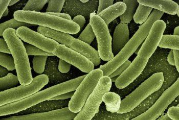 Alimentation, dépression et microbiote intestinal - Biblio